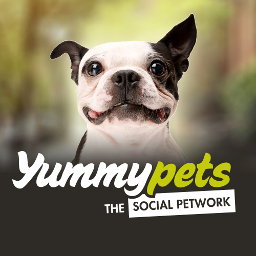 schumi (Dog - West Highland White Terrier) on Yummypets - Pet social network